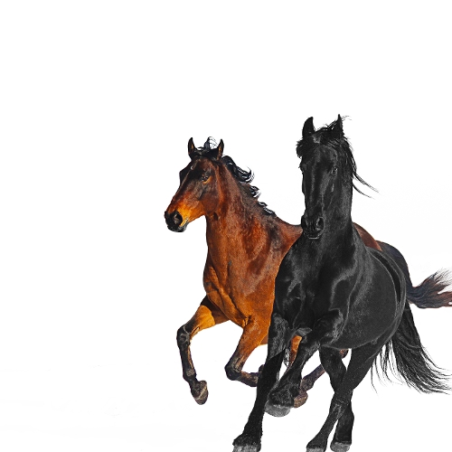 Lil Nas X - Old Town Road (Remix) (feat. Billy Ray Cyrus) 앨범이미지